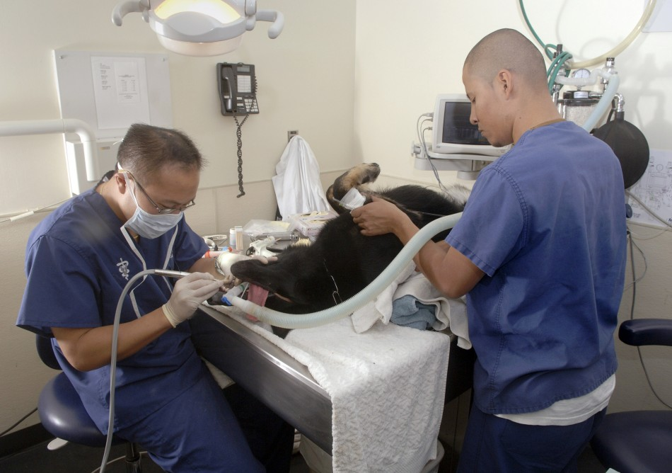 Veterinary Technologists/Technicians