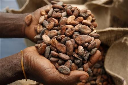 Dried cocoa beans are packed in hessian sacks on a cocoa farm near Amankwakram in Western Ghana