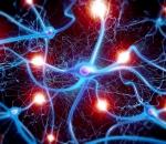 brain neurons neuroscience