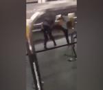 British passenger attacks two German police