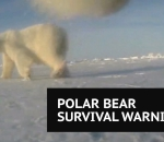 Amazing polar bear footage overshadowed by survival warning
