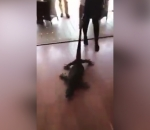 Dragging lizard