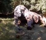 Injured bull elephant treated by Zimbabwe conservationists