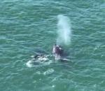 Humpback whale screenshot