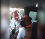 Drunk man and dog