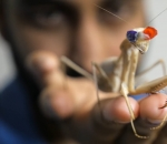 praying-mantis-wearing-3-d-glasses-reveals-completely-new-form-of-vision