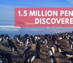 scientists-discover-hidden-supercolony-of-1-5-million-penguins