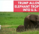 trump-quietly-gives-go-ahead-for-elephant-trophy-imports-into-u-s