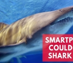 new-smartphone-app-clever-buoy-could-prevent-shark-attacks