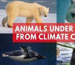 animals-under-threat-from-climate-change